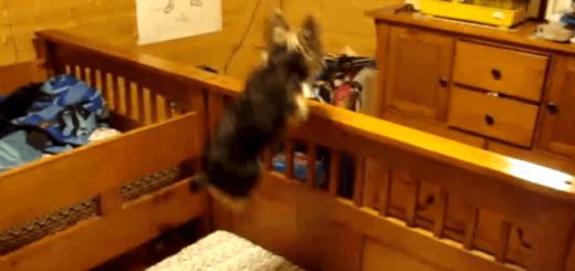 カゴの中のハムスターに気付いてほしくて猛ジャンプする犬
