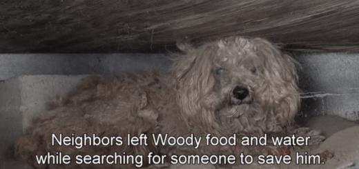 床下で亡くなった飼い主を待ち続けたプードル、愛によって救出される