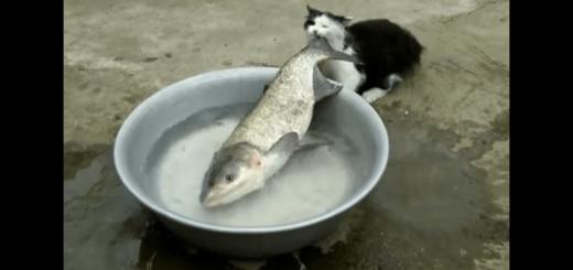 それは無茶かも…。狙った獲物が大きすぎて四苦八苦する泥棒ネコ