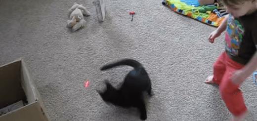 【大乱闘】ネコとレーザーポインターを使って遊んでいたら息子も乱入してきた(笑)