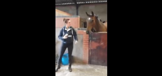 音楽に合わせてノリノリでダンスをする馬が超クール!