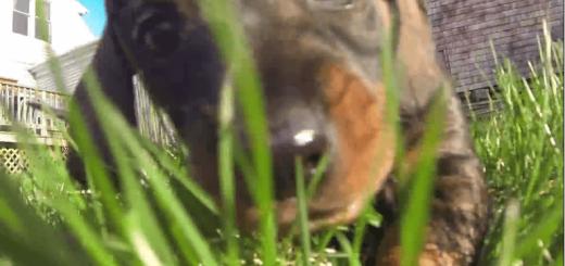 好奇心いっぱいの仔犬たちが草原を走り回る姿に癒やされる