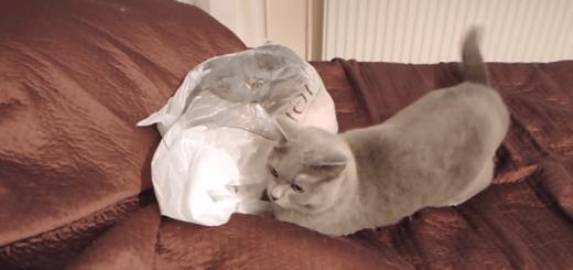 【4秒の衝撃】ビニール袋をゴソゴソするニャンコに起きた悲劇のハプニング