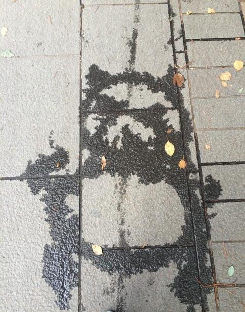 ライオンやパンダまで! 水で描かれたキュートな上野動物園にほっこり