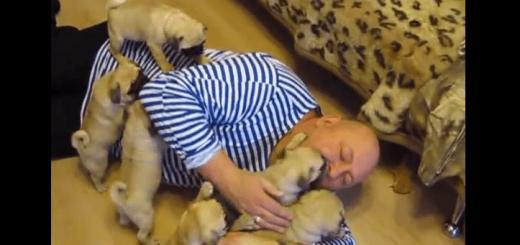 最高の目覚め!パグの仔犬達にモーニングキスをされる男性に嫉妬