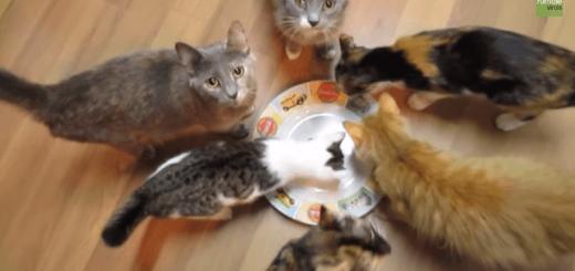 「ツナだよ〜!」と言いながら空のお皿をネコたちの前に置いてみたら…