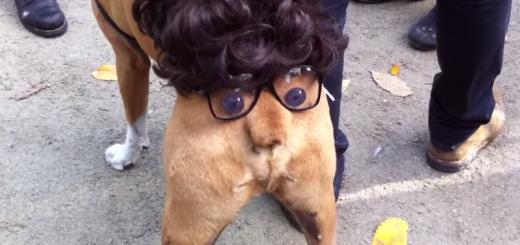 逆人面犬!? ハロウィン仮装をしている犬のオシリが可愛すぎる