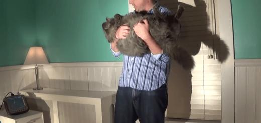 体重13kgのデブ猫は背中から落ちても足から着地できるか実験してみた