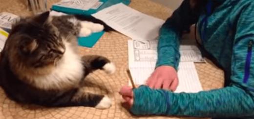 宿題中の女の子を邪魔したいネコ