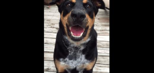 飼い主に優しくささやきかけるイケメン犬